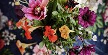 Beautiful Flowers / flowers, blumen, spring, summer, garden, beautiful flowers, flower bouquets, flower diy, flower arrangements