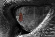 Red Riding Hood / by Beth Storhoff
