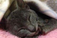 Como não amar?! / Um pouco sobre a minha gata, Pérola, e um pouco sobre meu amor por felinos.