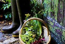 Da horta ao fogão