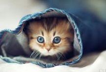 Cute ♡ - Suloinen ♡