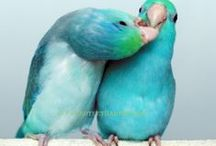 Why I Love Parrotlets / by Rhonda Dunaway