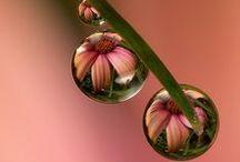Beautiful picture - Kaunis kuva