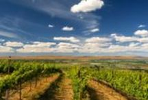 How To Take The Best Photos in Wine Country / Tips from professional photographer Richard Duval.