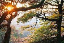 Beautiful nature - Kaunis luonto