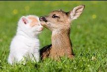 Best friends - Parhaat ystävät