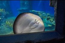 aquariums | aquatic animals