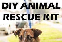 Pet Parent DIY / Do-it-Yourself ideas for your precious pets.