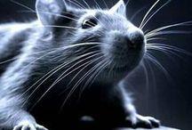 mókusok, nyulak, egerek...