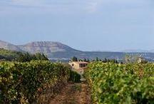 Turisme Enològic / Wine Tourism