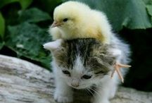 Animaux / Lil' cuties !