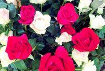 Fira de la Rosa / Aquí teniu algunes de les fotos de la #firadelarosa que es va celebrar del 6 al 8 de Juny #aRoses
