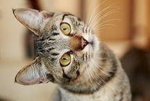 cats / Cat
