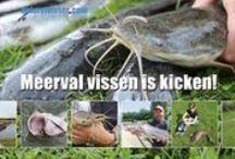 Meervalvissen / Meerval vissen is kicken. Alles over vissen op meervallen op de visvijvers in Nederland en België