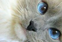 Kittens  'o'