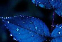 Blu, Blue, Bleu