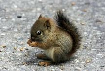 """Squirrels / As a toddler I called them """"Gyllas"""", they're great fun to watch. / by Cris Lewis"""