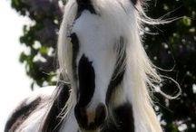 Equine beauties