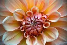 Photos de plantes et fleurs pour Maman***