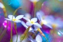 couleurs....