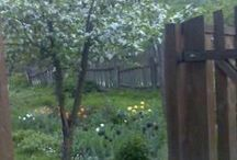 my garden / the garden of my house