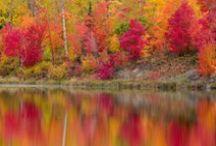 Jesień / Krajobrazy jesienne