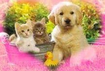 Kot i pies / Przyjaźń