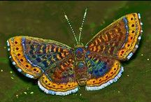Motyle i inne owady