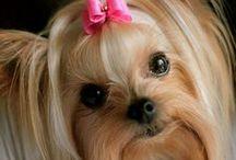 *Inspiration* Cute Baby Animals Photos / Cute Baby Animal Photos