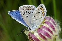 Pillangó & madár