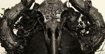 Gothic Horns
