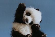 Cute Cuddly Fuzzywumps / by Michelle Plouff