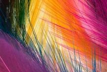 Color - Color Explosion / Color creations brighten my day. / by Shirley Hamm