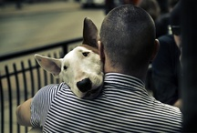 I love Bull Terrier / by Svetlana L