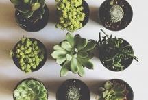 Cactus&Friends