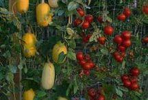 Gardening / by Susann Lowary
