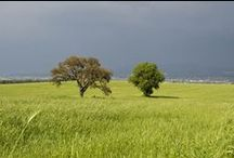 Le nostre Tenute a Sud di Roma / Tenuta Pescarella e Tenuta Monte di Leva: campi di grano, girasole, colza... Il nostro impegno per l'ambiente e le energie pulite.
