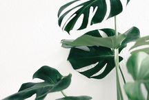 Plant motherhood