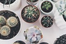 Can't Touch This    Succulents