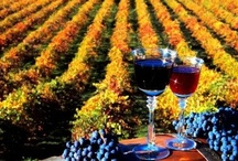 Wine Tours / In Texas you wouldn't think there would be that many wineries around but boy are you wrong! We are no Napa but we have some of the best selection of wine you can find in the Southern States! Given that we would like to give you a little tour!