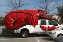 Strange, Weird and Unknown! / You never know what you might meet on the road! Here are a few options that you might have never thought you would see!