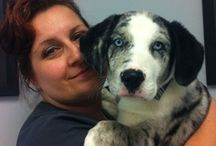 Cute Puppy of the Day / Just a small sampling of the cuteness we witness on a daily basis!