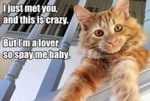 Spay & Neuter / We're all about S&N!