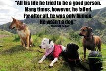 Pet Quotes We Love / A collection of some of our favorite pet quotes!