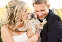 Dogs & Weddings / Looking to include your beloved pup in your ceremony.  Here are some great ideas!