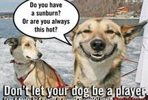 Don't Let Your Pet Be A Player / Help stop the epidemic that is cheesy pick up lines!!! Fix your pet by 4 months to prevent accidental litters.  #WhenToSpay