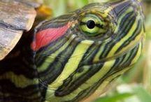 reptiles/amphibians / by Autumn Bradley
