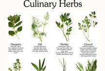 Garden, herbs etc