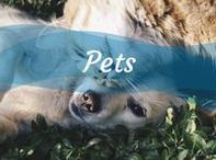 Pets / Dicas para cuidar, adestrar e entender melhor o seu pet. Pois afinal não há nada que nos faça mais feliz do que eles!