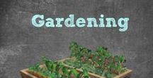 Gardening / Find informative Gardening Information,Gardening Tips, Growing Tips, Information about Fertilizers, How To Start a Garden, Gardening all Year, Gardening In Small Spaces , Vertical Gardening and more